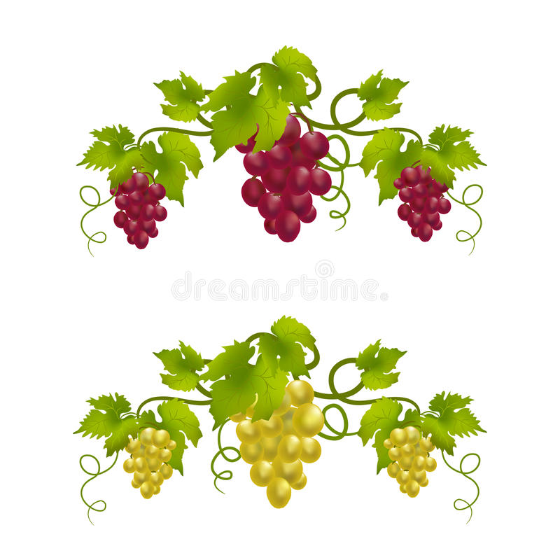 Monograma de la vid de uva libre illustration