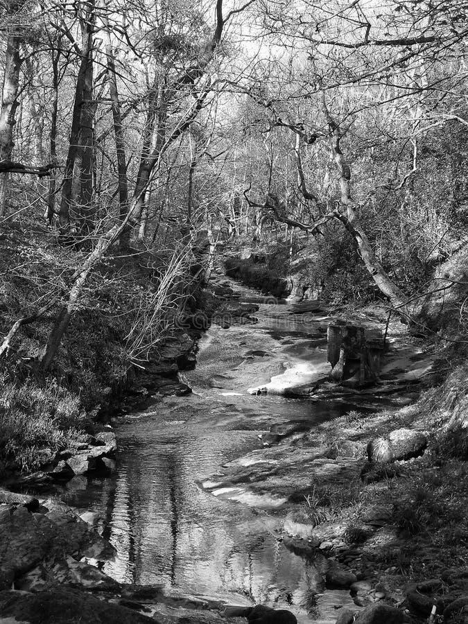 Monokrom bild av en flod som kör ner en steeply skogsbevuxen backe i västra - yorkshire royaltyfria bilder