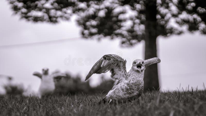 Monokrom bild av seagulls omkring som ska tas av med trädet i mjukt arkivfoto