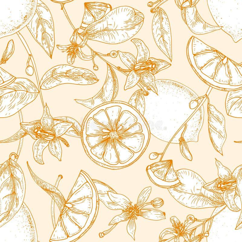 Monokrom sömlös modell med nya citroner, helhet och snittet in i skivor, blommor och sidor på ljus bakgrund stock illustrationer