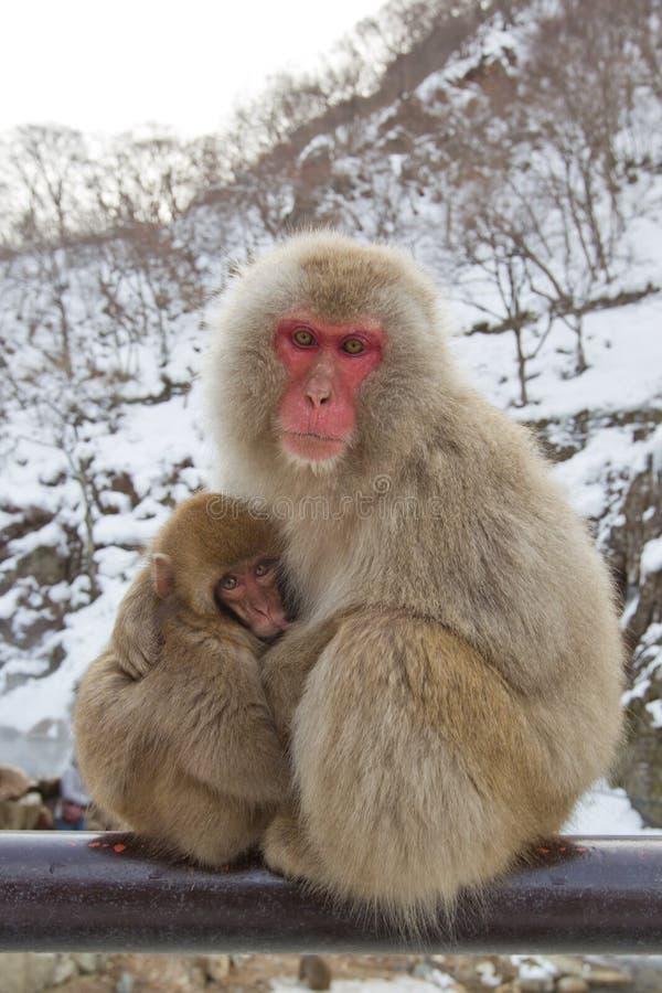 Monos de la nieve en el resorte caliente imágenes de archivo libres de regalías
