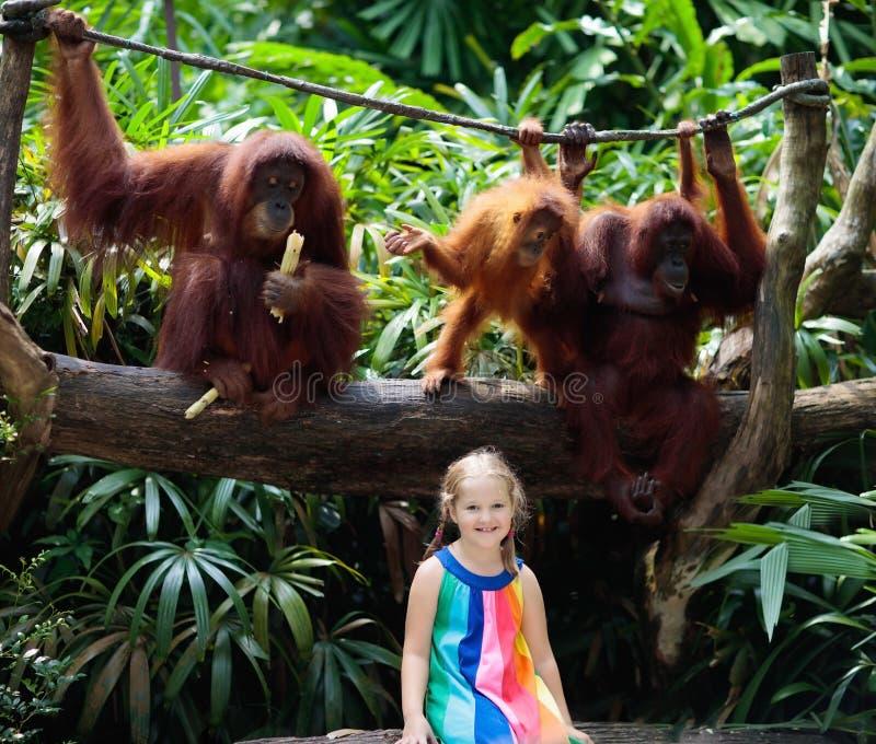 Monos del reloj de los niños en parque zoológico Niño y animales fotografía de archivo libre de regalías