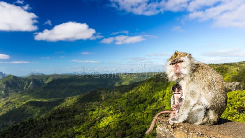 Monos en el punto de vista de las gargantas mauritius Panorama imagen de archivo libre de regalías