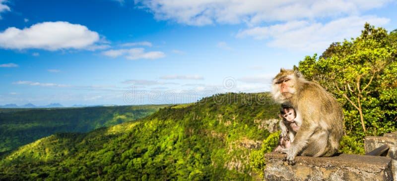 Monos en el punto de vista de las gargantas mauritius Panorama fotografía de archivo libre de regalías