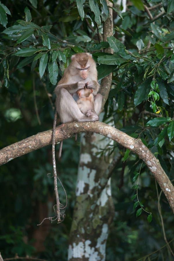 Monos que comprueban para saber si hay pulgas y señales en la cerca concreta en el PA fotos de archivo