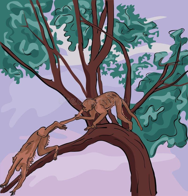 Monos que juegan en el salvaje libre illustration