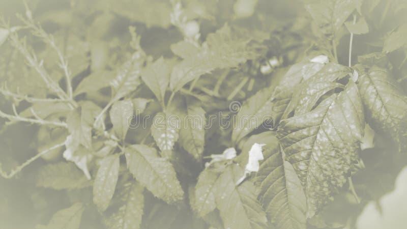 Monotone das folhas em close up, textura das folhas, fundo foto de stock royalty free