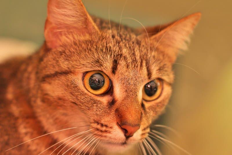 Monsieur Cat photo libre de droits