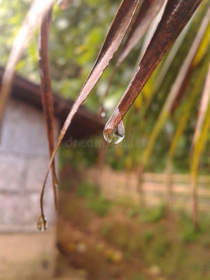 monsoon arkivfoto