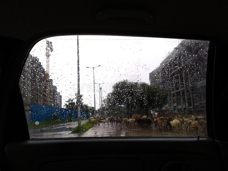 Monsoon Scape of city. Cityroafs, road, streetlights, car, window, flock, sheeps, indian, streets royalty free stock images