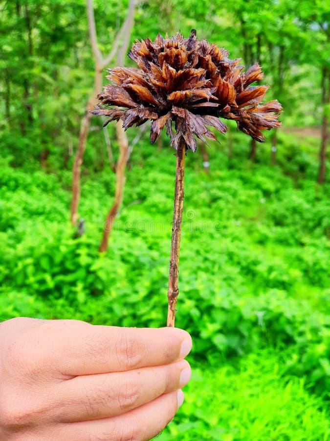 Enjoy the Nature Flower royalty free stock image