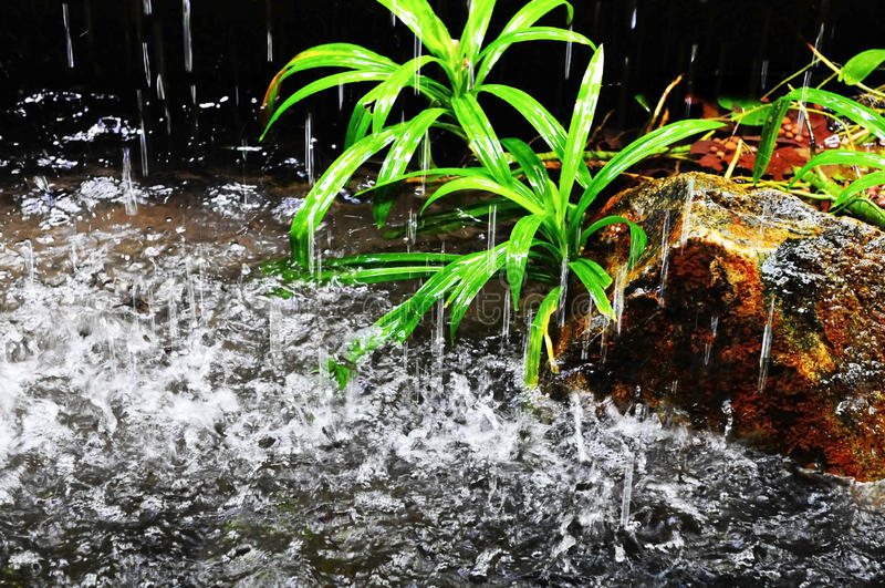 monsoonregn royaltyfri bild