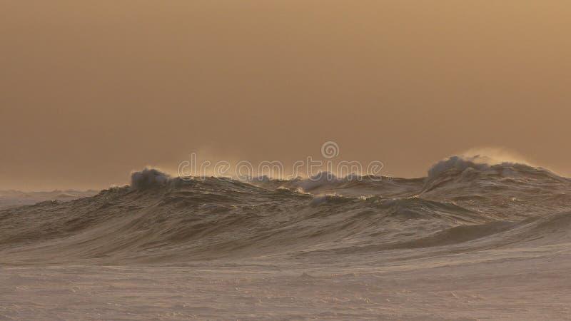 Monster waimea bay storm surf royalty free stock photo