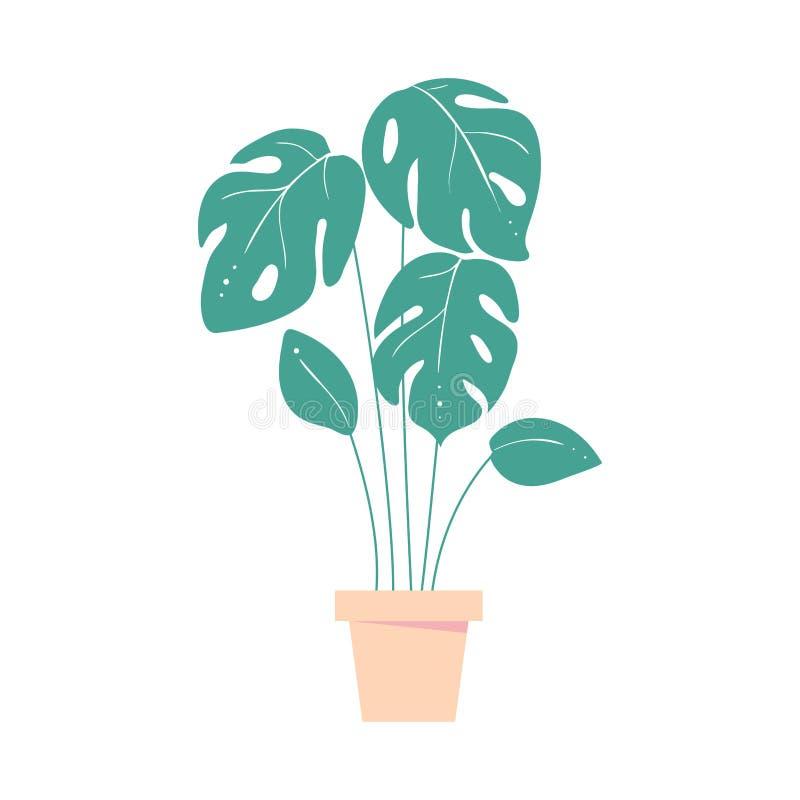 Monstera事假 罐的家庭热带植物 棕榈异乎寻常的叶子  库存例证