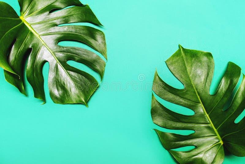 Monstera在绿色夏天背景离开 免版税库存照片