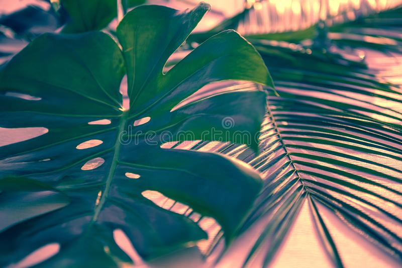 monstera或分裂叶子爱树木的人Monstera deliciosa热带叶子植物深绿叶子  免版税库存照片