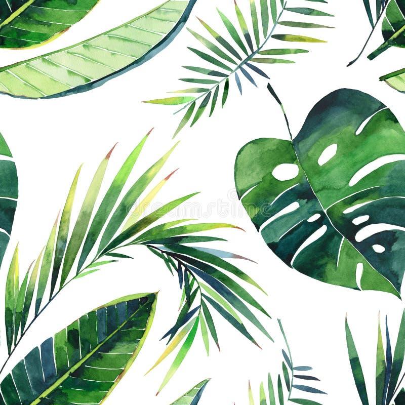 monstera香蕉回归线棕榈叶的明亮的美好的可爱的绿色草本热带美妙的夏威夷花卉夏天样式 向量例证