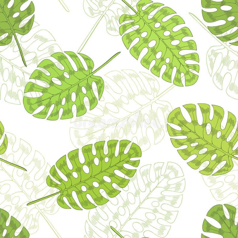 Monstera φοινικών φύλλων γραφική πράσινη απεικόνιση σκίτσων σχεδίων χρώματος άνευ ραφής απεικόνιση αποθεμάτων