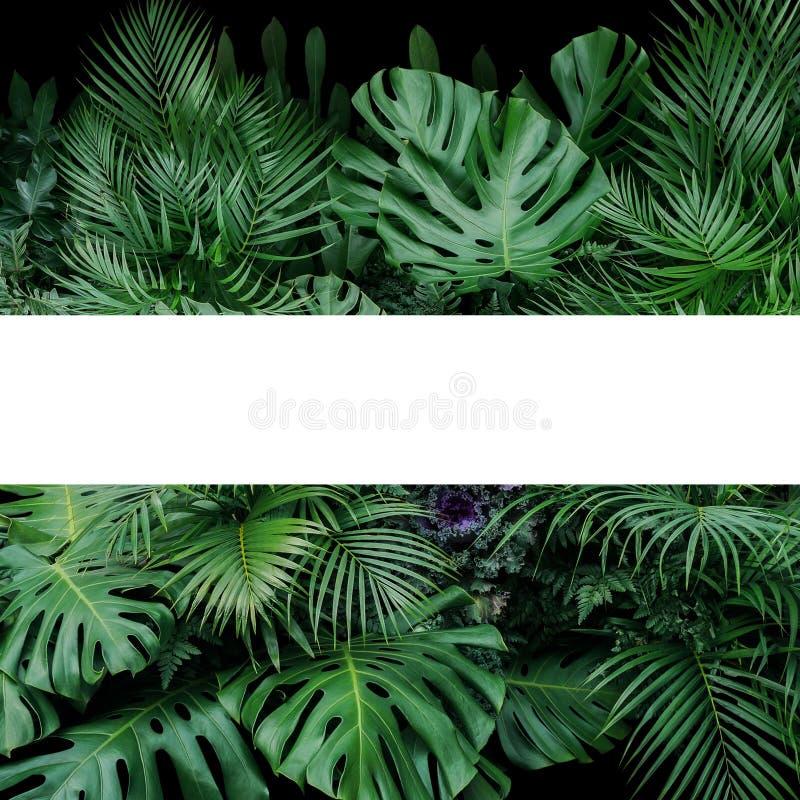 Monstera, папоротник, и ладонь выходят тропический фон природы куста заводов листвы с белым положением рамки вне на темную предпо стоковая фотография rf
