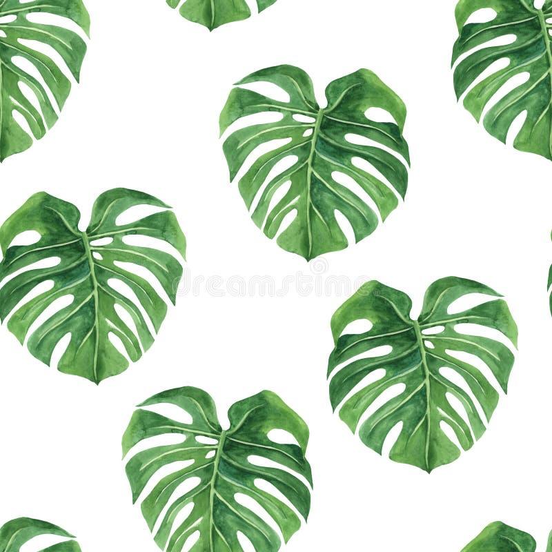 Monstera Тропическая безшовная картина с экзотическими листьями ладони Тропическая иллюстрация листвы джунглей Экзотические завод иллюстрация вектора