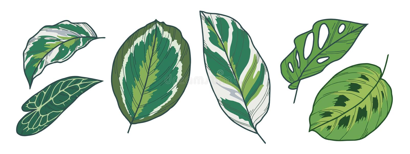 Monstera Adansonii,Calathea大奖章、Medaillon、白色融合、Pothos和安祖花异乎寻常的叶子传染媒介图画  皇族释放例证