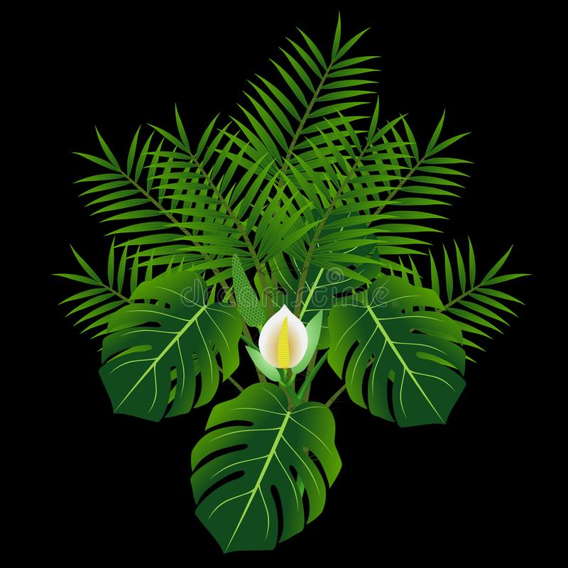 Free Monstera And Tropical Palm Leaves Isolated On Black Background. Stock Images - 161015764