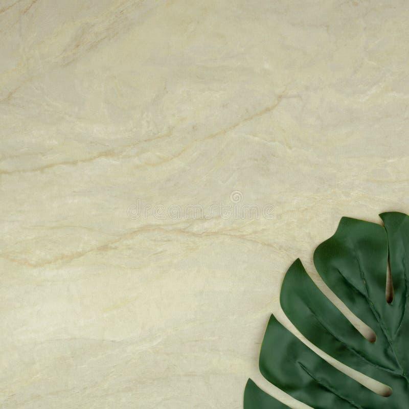 Monstera blad p? tom brun matt marmor arkivbilder
