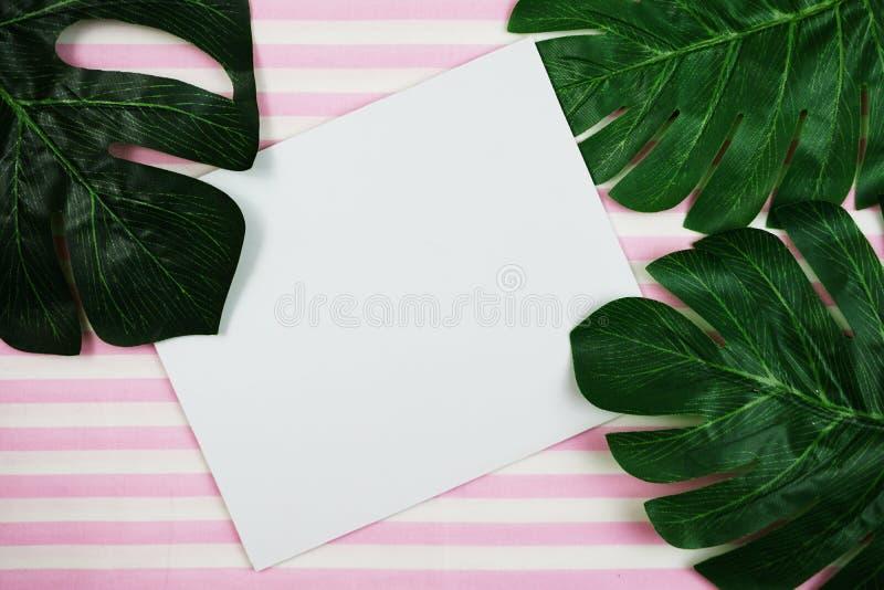 Monstera de feuilles et copie tropicaux de l'espace sur le fond rose images stock