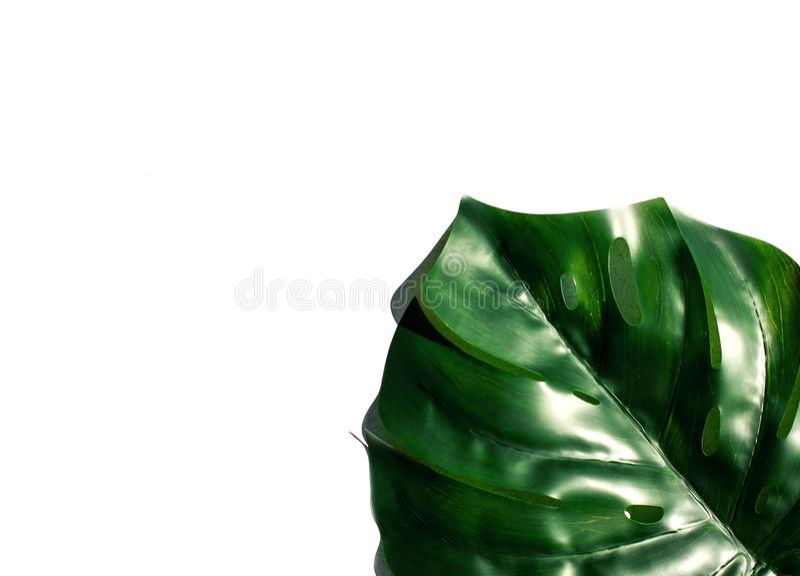 Monstera de la hoja en sol imagen de archivo