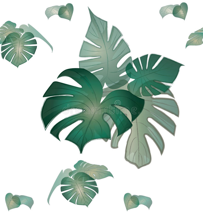 Monstera deliciosa plant leaves pattern stock photos