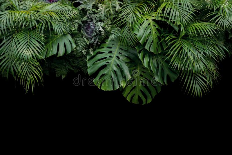 Monstera, fern, and palm leaves tropical rainforest foliage plan royalty free stock photos