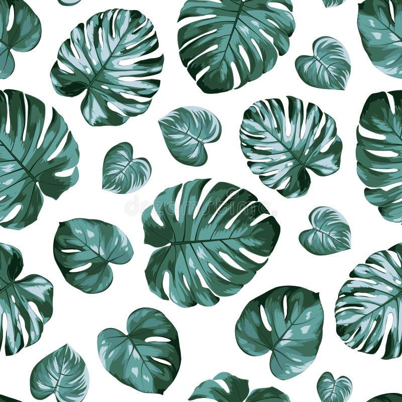 Monstera filodendronu rozłam opuszcza egzotycznej tropikalnej roślinie bezszwowego wzór Zielony błękitny windowleaf na białym tle ilustracji