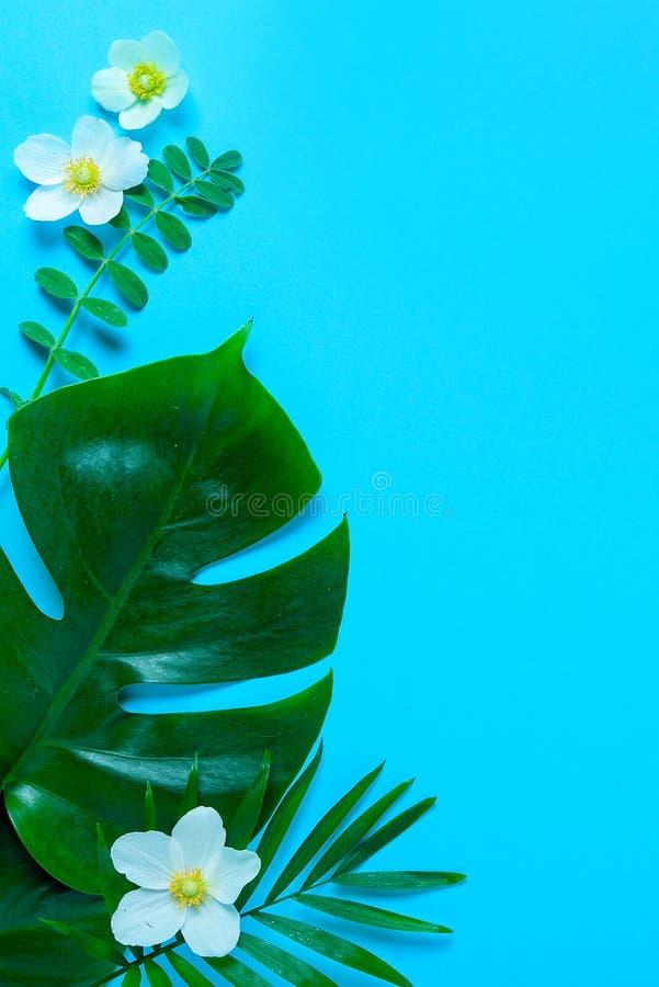 Monstera laisse le fond minimal d'été avec un espace pour un texte, la configuration plate, vue d'en haut photos libres de droits