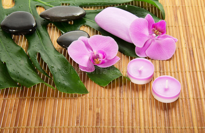 Monstera leaf, orchid and aromatic set royalty free stock images