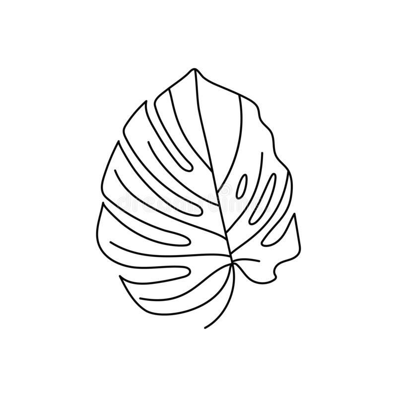 Monstera Leaf Of Tropical Plants Outline Palm Leaf In A Trendy Minimalist Liner Style Vector Illustration Stock Vector Illustration Of Icon Outline 184419964 A comic by alyssa stehle. dreamstime com