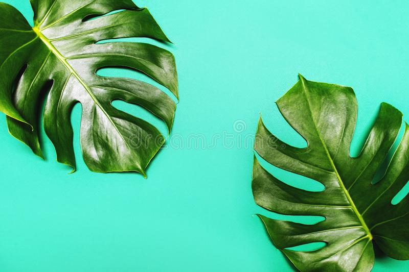 Monstera leaves on green summer background. royalty free stock photos