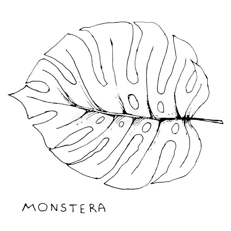 Monstera liść i ręcznie pisany wpisowa ręka rysujemy klamerki sztukę odizolowywającą na białym tle royalty ilustracja