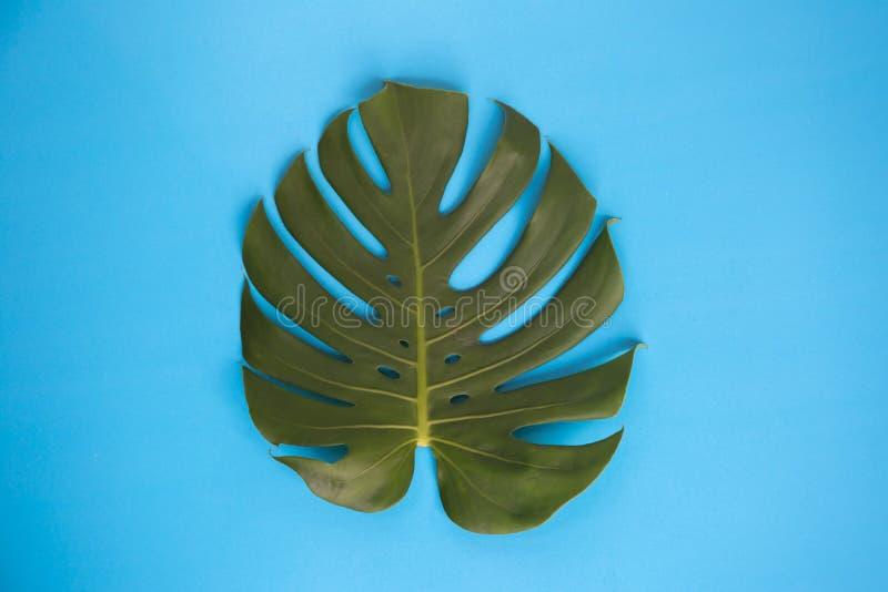 Monstera part dans le backgrou simple bleu vibrant créatif photo libre de droits