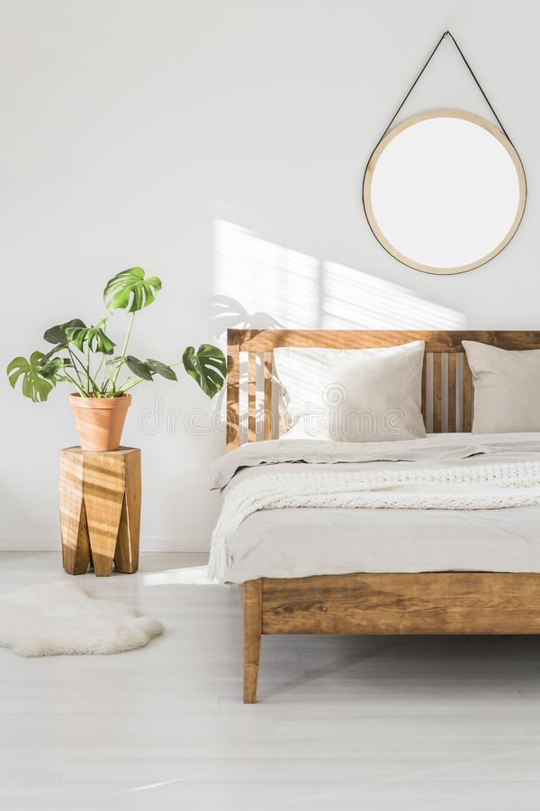 Monstera plant on a tree trunk night stand and a round mirror on a white wall in a sunlit bedroom interior with wooden furniture. Monstera plant on a tree trunk royalty free stock photo
