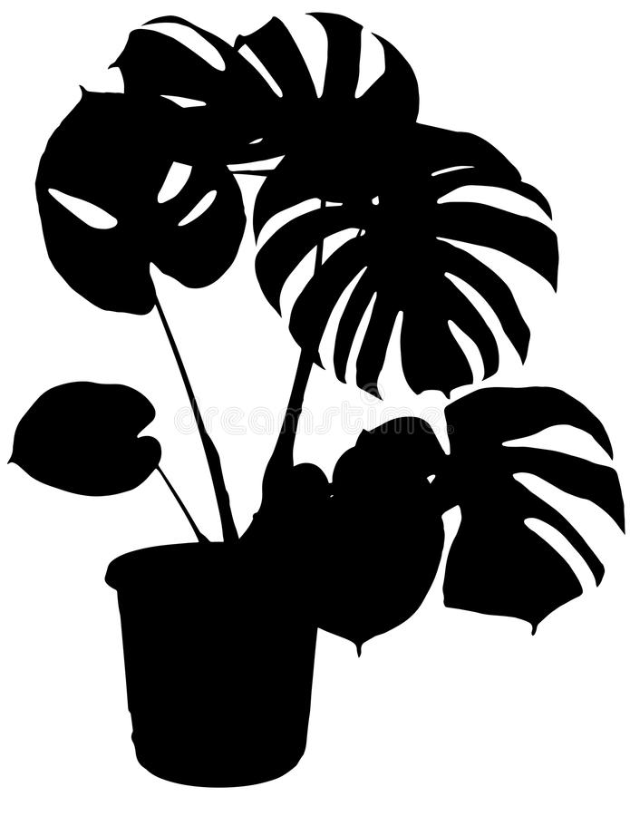 Monstera the potted plant vector illustration