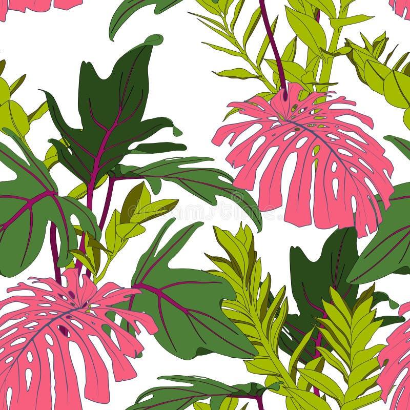Monstera rosado exótico y hojas tropicales verdes, fondo blanco Modelo incons?til floral stock de ilustración
