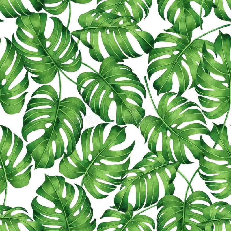 Monstera tropical da pintura da aquarela, folha de palmeira, fundo sem emenda do teste padrão da licença verde Tropica tirado mão ilustração do vetor