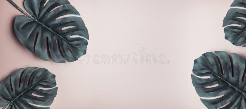 Monstera tropical en un fondo rosado del verano, bandera, espacio de las hojas para el texto, entonado foto de archivo
