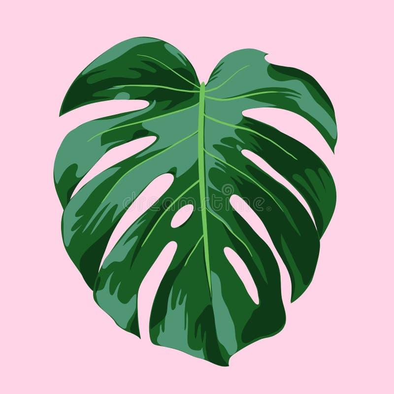 Monstera Tropical Leaf Illustration vector illustration