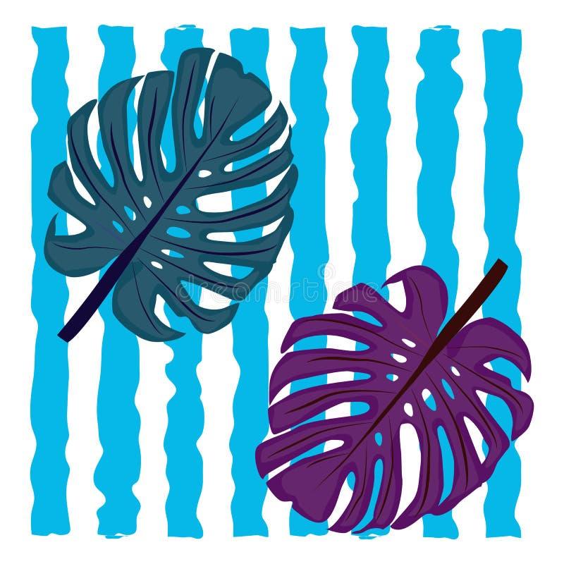 Monstera tropikalna roślina opuszcza na tle pionowo błękitni lampasy zdjęcia royalty free