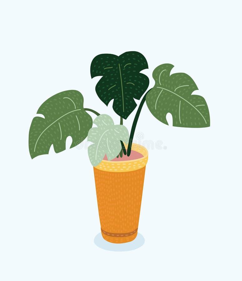 Monstera växt i kruka Hand dragen vektorillustration på vit bakgrund stock illustrationer