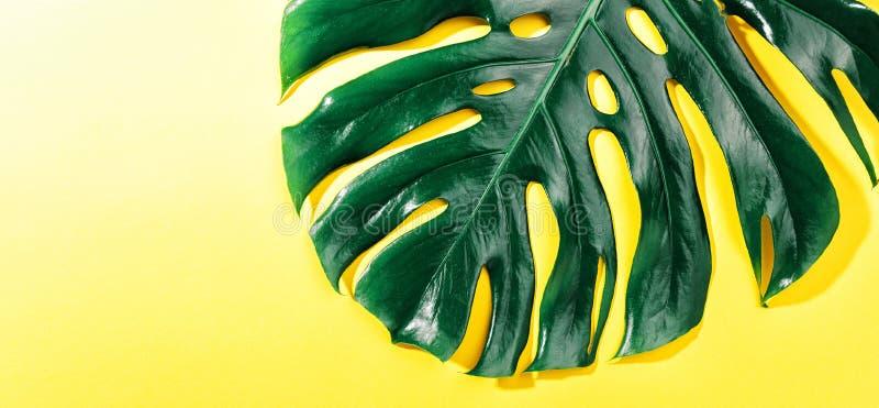 Monstera zieleni liść na kolorze żółtym obrazy stock