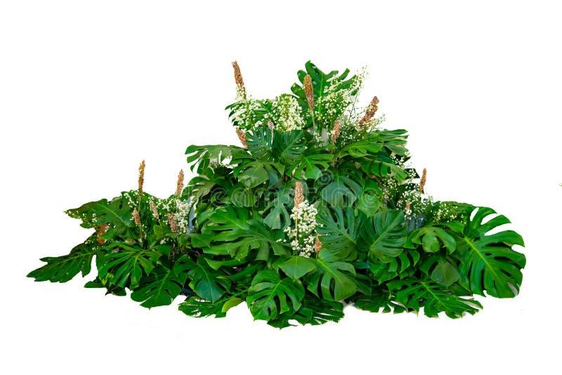 Monsterbladeren in moderne van de het gebladerteinstallatie van ontwerpen tropische bladeren van de de struik bloemenregeling geï stock afbeeldingen