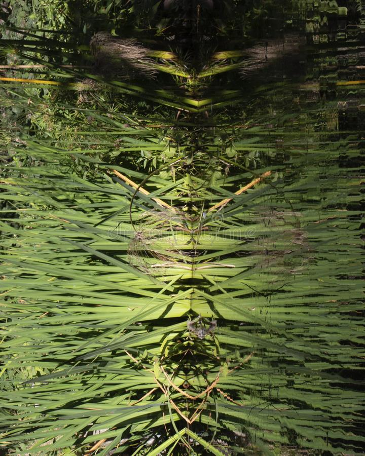 Monstruo de Marsh fotografía de archivo