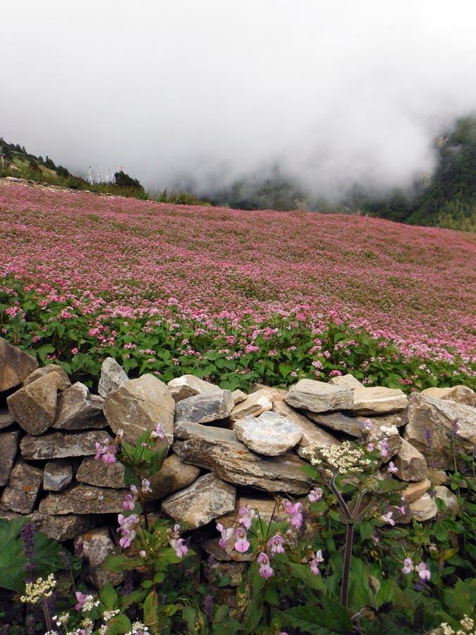 Monsun Chmurnieje Zakrywający Himalajskiego gryki pole zdjęcia stock